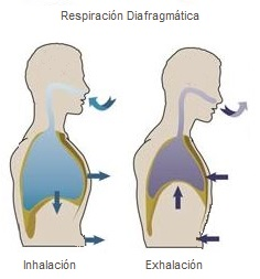 resp-diafrg-1