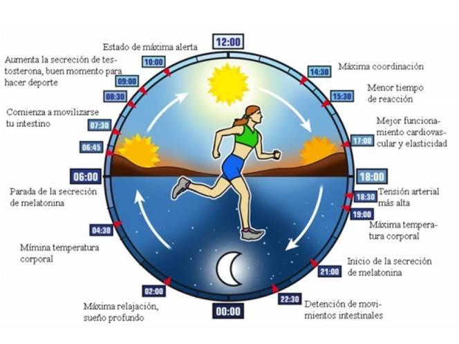 cronobiologia