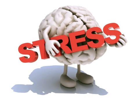human brain that embraces word stress
